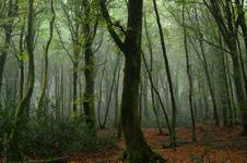 Forest(#3205), Wed, 10 Oct 2012