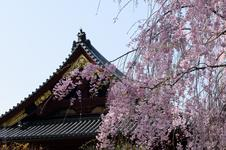 Ueno shirne with Sakura(#3323)
